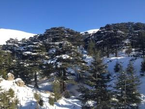 cedars-of-lebanon-snow